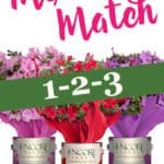 Paint cans of Encore Azalea blooms